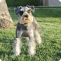 Adopt A Pet :: Lucy - Palo Alto, CA