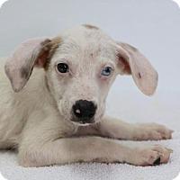 Adopt A Pet :: Spike - Groton, MA