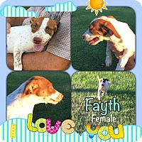 Adopt A Pet :: Fayth meet me 8/5 - Manchester, CT