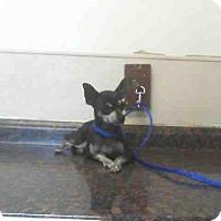 Adopt A Pet :: *TESSA - Las Vegas, NV