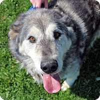 Adopt A Pet :: FAWKES - Adoption Pending - Boise, ID