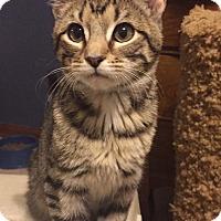 Adopt A Pet :: Nell - Overland Park, KS