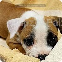 Adopt A Pet :: Lucky - Modesto, CA