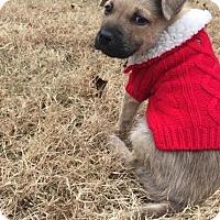 Adopt A Pet :: Mac - Gallatin, TN