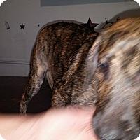 Adopt A Pet :: Jiggles - Wytheville, VA