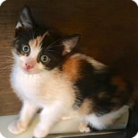 Adopt A Pet :: Clementine - Santa Fe, TX