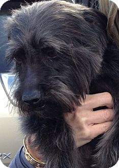 Terrier (Unknown Type, Medium) Mix Dog for adoption in Thousand Oaks, California - Jimi