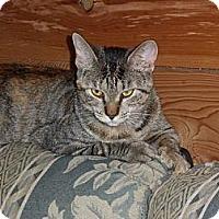 Adopt A Pet :: Tressa - Norwich, NY