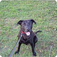 Adopt A Pet :: Charlie - Adamsville, TN
