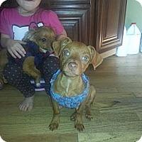 Adopt A Pet :: Stimpy - East Rockaway, NY