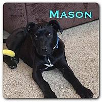 Adopt A Pet :: Mason - Maryville, IL