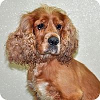 Adopt A Pet :: Kramer - Port Washington, NY