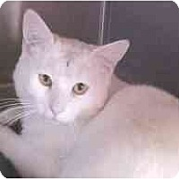 Adopt A Pet :: Clyde - Lunenburg, MA
