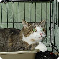 Adopt A Pet :: Henry - CARVER, MA