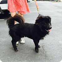 Adopt A Pet :: Blackie - Jupiter, FL