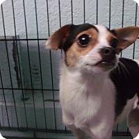 Adopt A Pet :: Lexi - Muskegon, MI