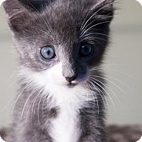 Adopt A Pet :: Louie - Island Park, NY