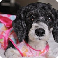 Adopt A Pet :: Emma Jean  (local only) - Gulfport, MS