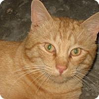 Adopt A Pet :: Mellow - brewerton, NY