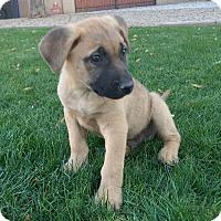 Adopt A Pet :: Wallace - Phoenix, AZ