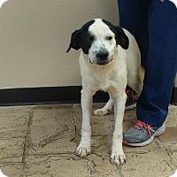 Adopt A Pet :: Avi - Oviedo, FL