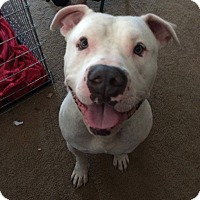 Adopt A Pet :: Maximus - Eastpointe, MI