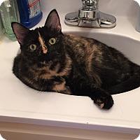 Adopt A Pet :: Chai - River Edge, NJ