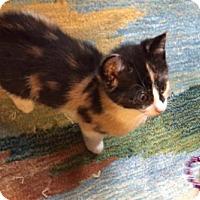 Adopt A Pet :: Panthera - New York, NY