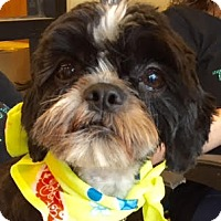 Adopt A Pet :: Stephen Curry - Euless, TX