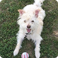 Adopt A Pet :: Lucas Trumbull - Pataskala, OH