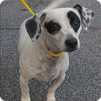 Adopt A Pet :: 16-06-1826 Bandit - Dallas, GA