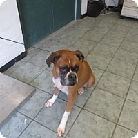 Adopt A Pet :: Misty - Weatherford, TX