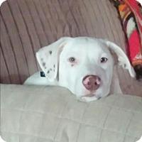 Adopt A Pet :: Van Bellamy - Homewood, AL