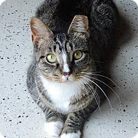 Adopt A Pet :: Jazz - MARENGO, IL