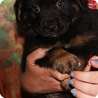 Adopt A Pet :: Kam - Danbury, CT