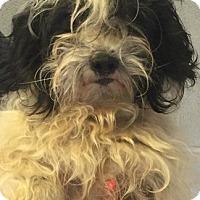 Adopt A Pet :: Stevie - Oswego, IL