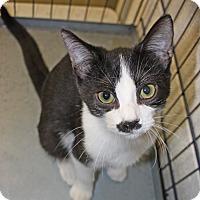 Adopt A Pet :: Wolfgang - Harrisonburg, VA