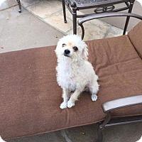 Adopt A Pet :: Laverne - San Diego, CA