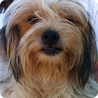Adopt A Pet :: Breezy - Simi Valley, CA