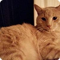 Adopt A Pet :: momma - Spring, TX