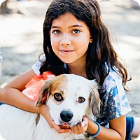 Adopt A Pet :: Cubby would love a dog friend! - Los Angeles, CA