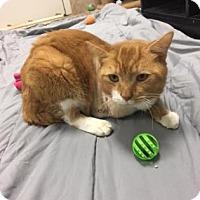 Adopt A Pet :: George - Titusville, FL