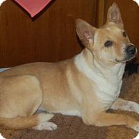 Adopt A Pet :: Noah - Manning, SC