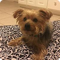Adopt A Pet :: Odie - Aiken, SC