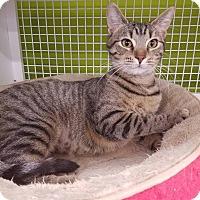 Adopt A Pet :: BeBe - Louisville, KY