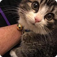 Adopt A Pet :: Moonpie - Scottsdale, AZ