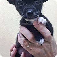 Adopt A Pet :: Benny & Joon