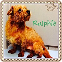 Adopt A Pet :: Ralphie - Los Angeles, CA