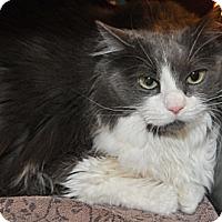 Adopt A Pet :: Tess - Garland, TX