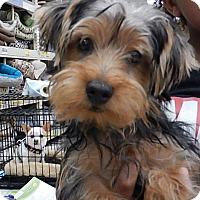 Adopt A Pet :: Andre - Tucson, AZ